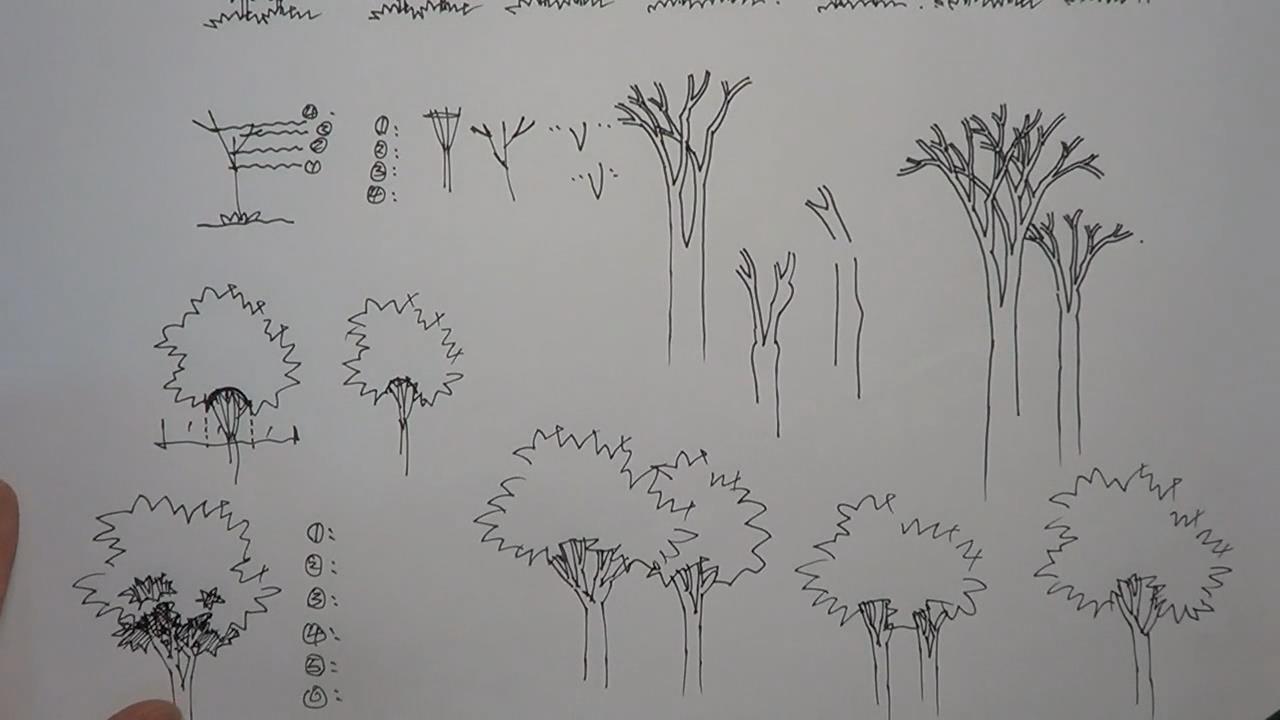 设计分享 景观设计手绘树线稿 > #景观# #建筑# #设计#  #景观# #建筑