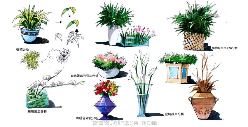 马克笔手绘植物高清 马克笔手绘动漫图片 马克笔手绘产品速写